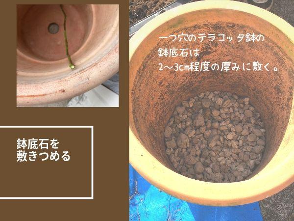 バラテラコッタ鉢に鉢底石を敷きつめる