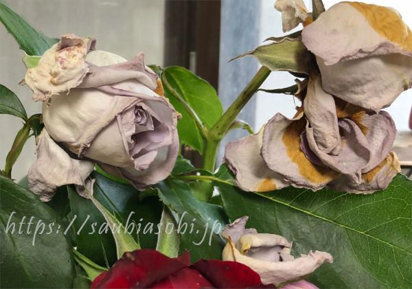 バラの病気灰色かび病