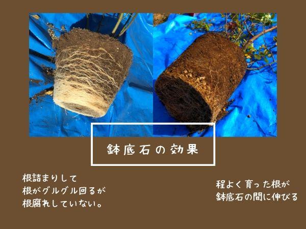 バラ鉢底石の効果