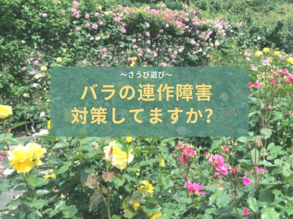 バラの連作障害の対策