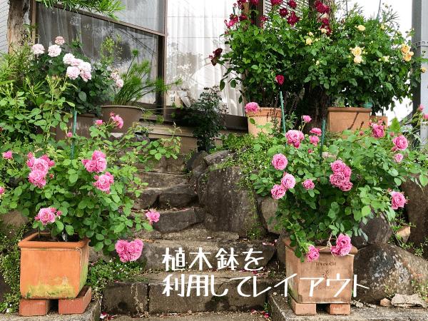 狭い庭に鉢バラをレイアウト