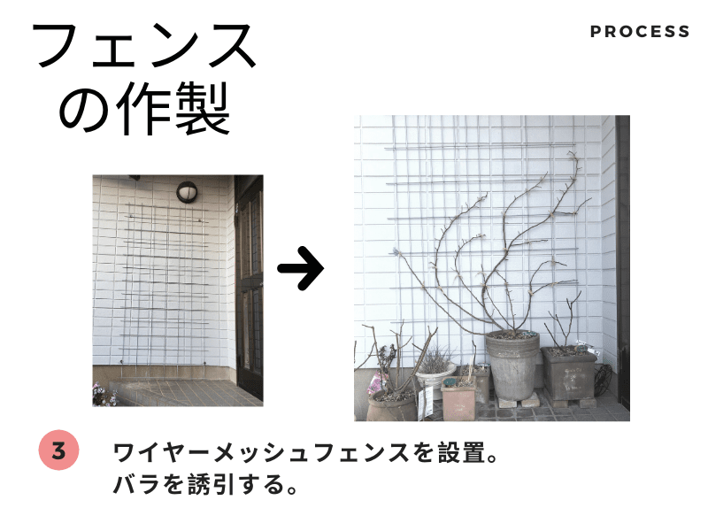 フェンスの製作 完成と誘引