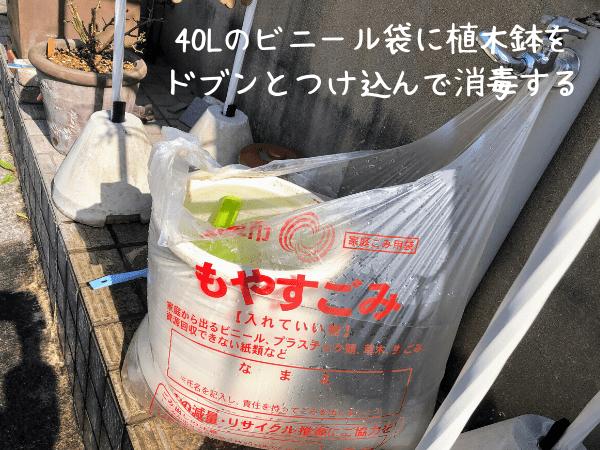 植木鉢をまるごと消毒する方法