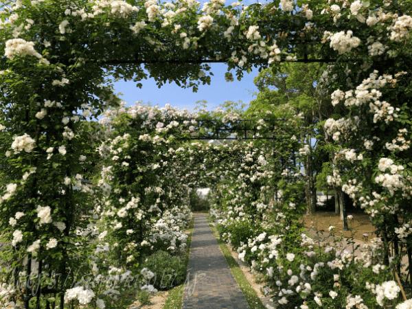パレスハウステンボスの前庭