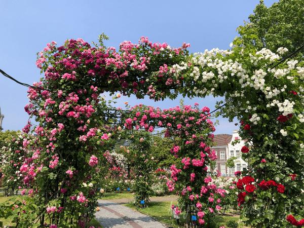 ハウステンボス バラの回廊のアーチ