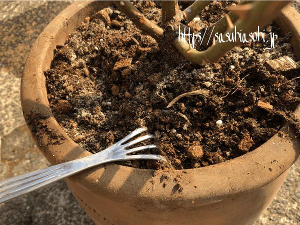 バラの土の表面に米ぬかを薄く混ぜ込むを