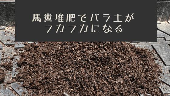 馬糞堆肥でバラ土がフカフカに