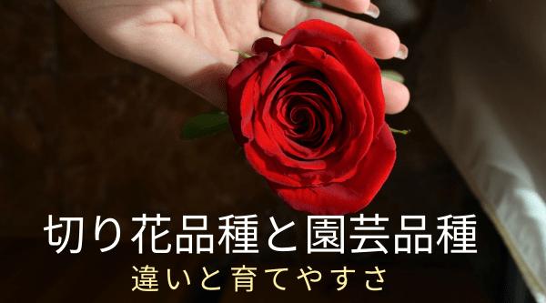 バラ切り花品種と園芸品種