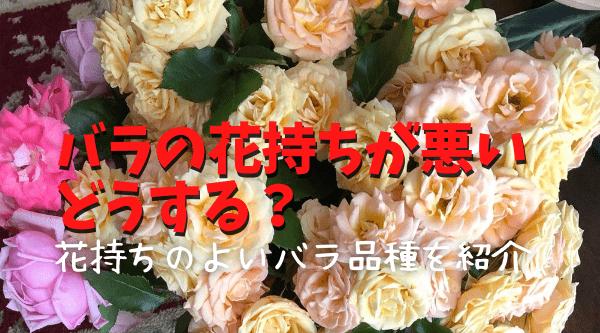 バラの花持ちが悪いときの対処方と長持ちするバラを紹介