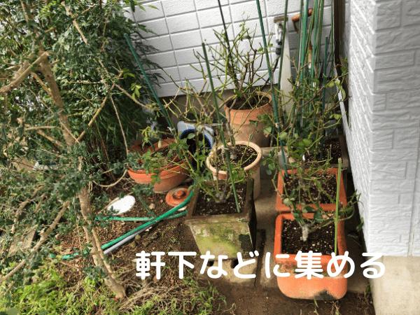 台風対策で鉢植えを軒下に避難